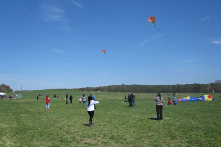 Flying kites in a park